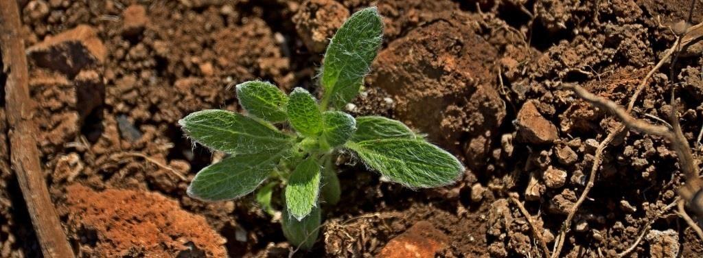 Neue Bepflanzung